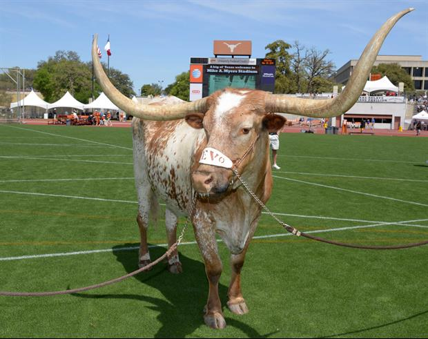 Longhorn Network Airing 5 Hours Of Bevo Hanging Out On Christmas.