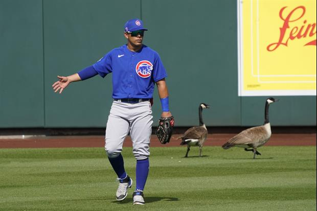 Geese Altercation Goes Down In Outfield During Cubs Vs. Diamondbacks Game