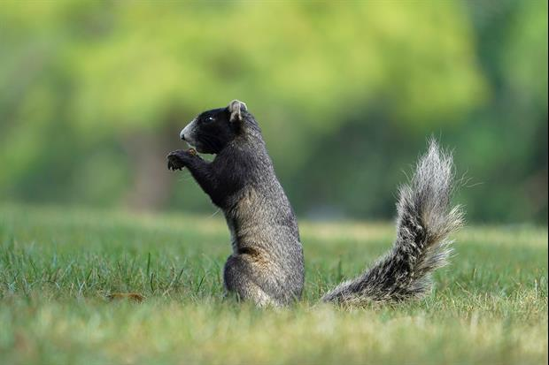 Crazy Video Of Squirrel Almost Getting Run Over At Sunday's IndyCar Race